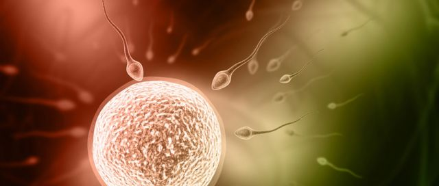 Augmenter la fertilité masculine